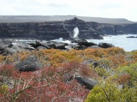 Ein Blowhole - Röhren, Löcher im leicht erodierbaren Lavagestein. Durch die Wellen wird Wasser von unten in einen Stein gedrückt und kommt oben durch den hohen Druck wieder herausgeblasen.