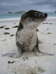 Robben gab es auf so ziehmlich jeder der Inseln. Diese kleine hier hatte es genossen vor der Kamera zu posen.