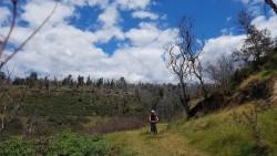 Geniale Landschaft im privaten Fenton Wald.